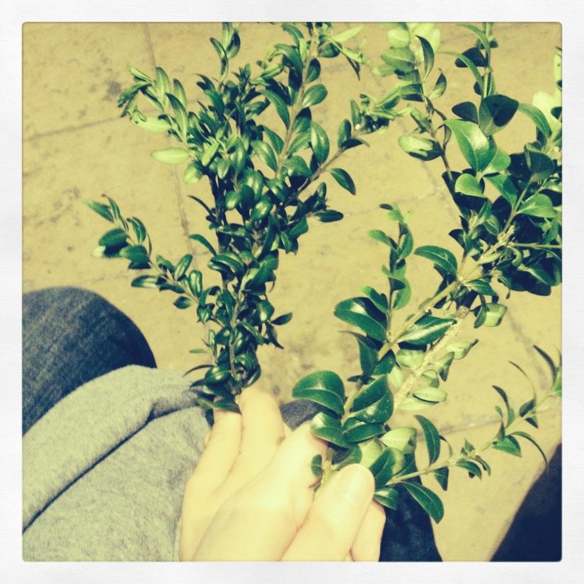 Rameaux d'olivier