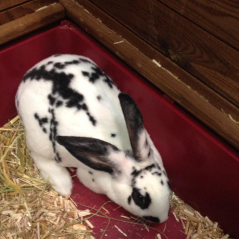 Phénomène lapin de Farmili