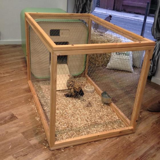 Je veux une poule chez moi quand mon r ve peut devenir for Construire une cage a lapin exterieur