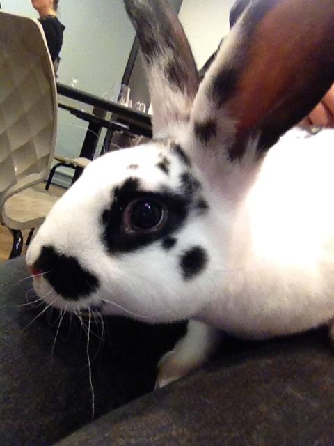 Selfie de phénomène le lapin