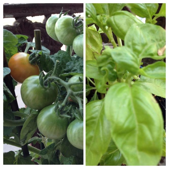 Tomates cerises et basilic