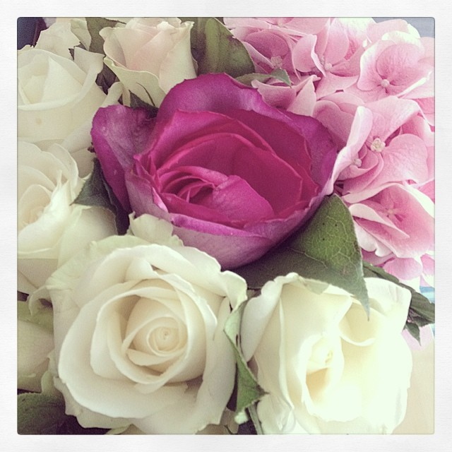 fleurs phenomene de maud