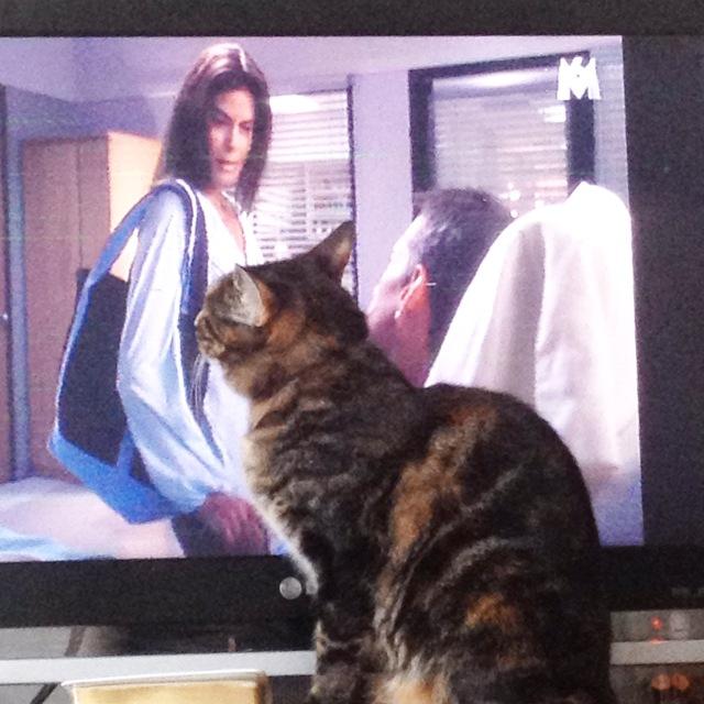 chat qui regarde la tele
