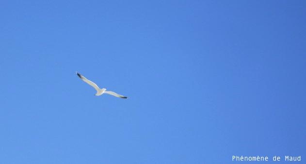 vol d'un oiseau