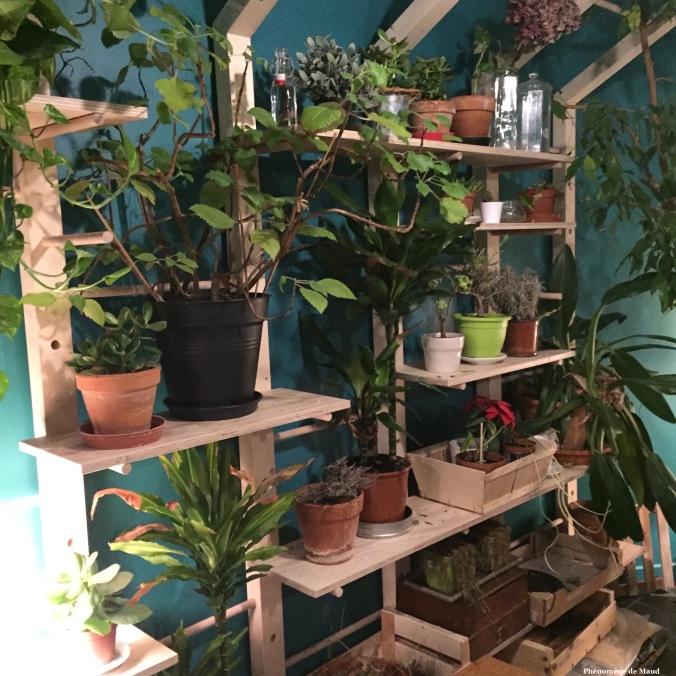 plantes vertes.jpg
