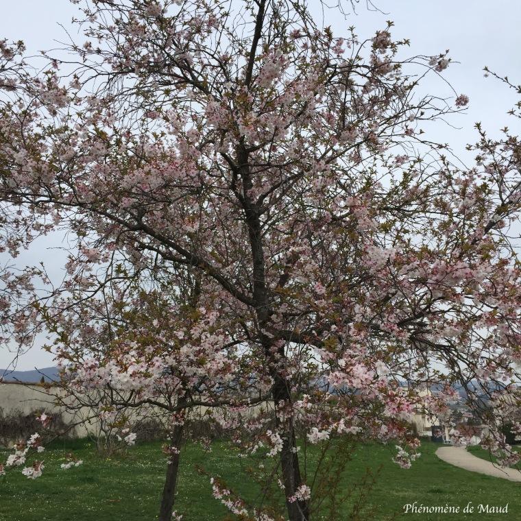 arbre en fleur.jpg