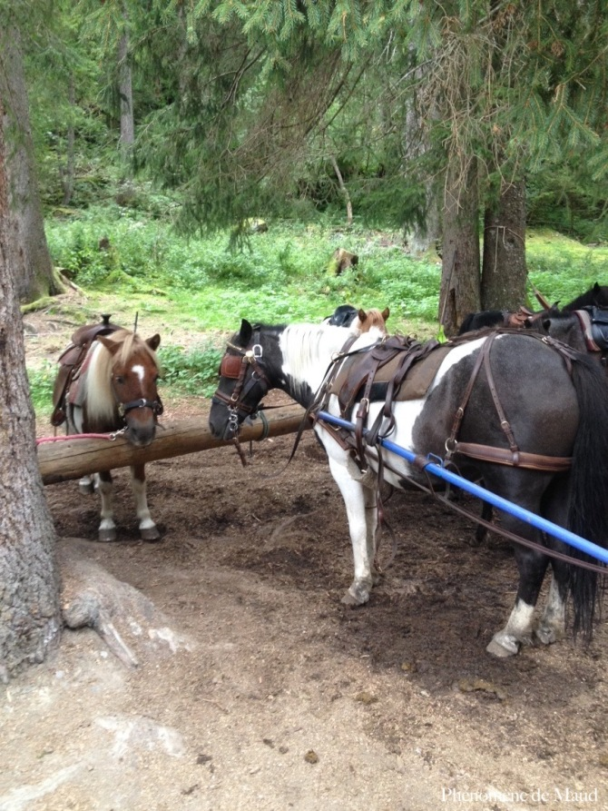 poneys paradis des praz