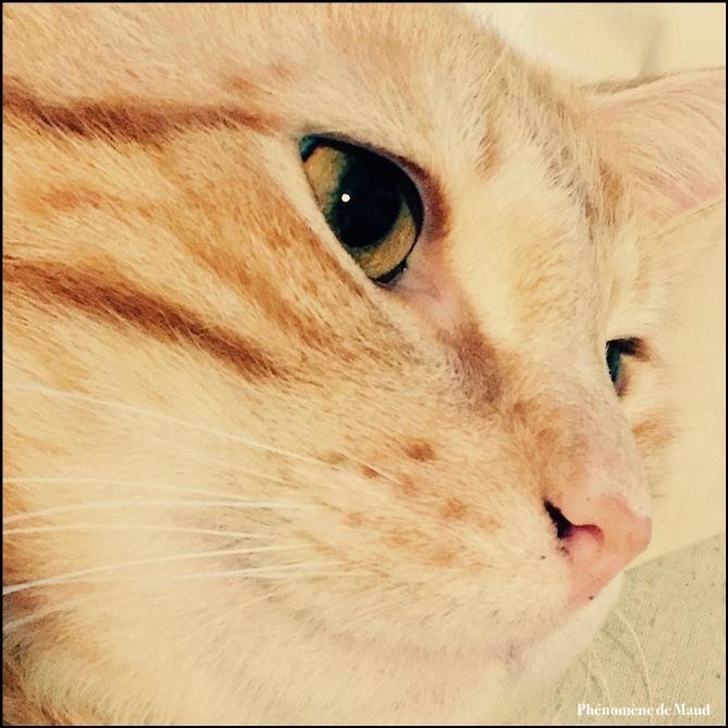tigrou chat roux .jpg