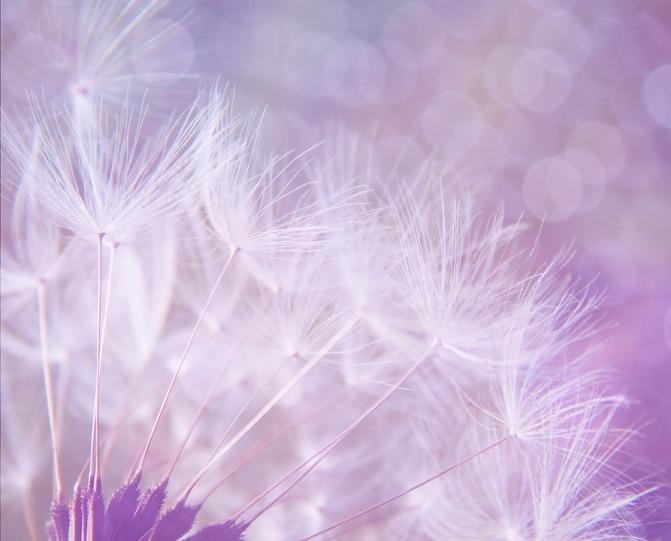 dandelion-923221_960_720-1