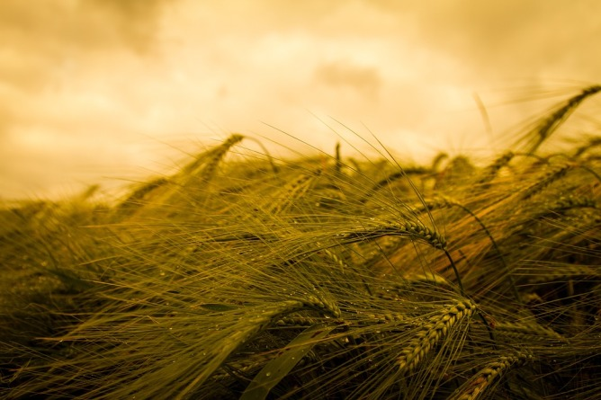 harvest-3159754_960_720.jpg