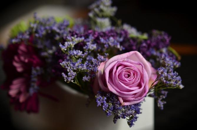 rose-1405552_960_720