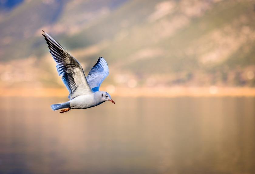 bird-3158784_960_720.jpg