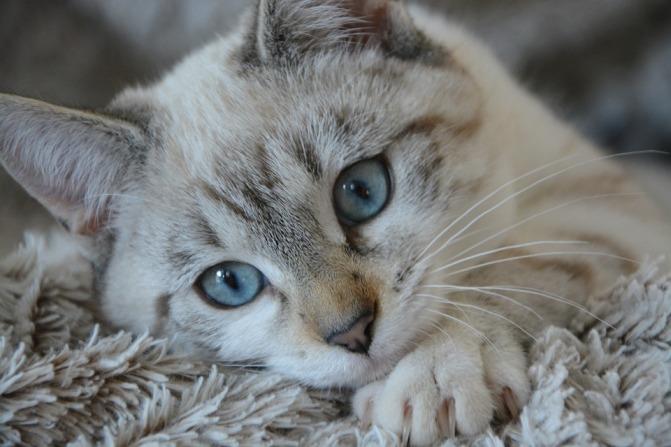 cat-2783601_960_720.jpg