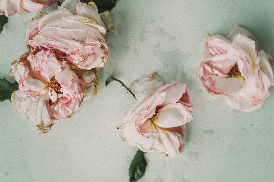 dried-flowers-1149191_960_720.jpg