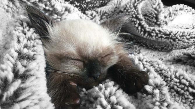 kitten-906876_960_720.jpg