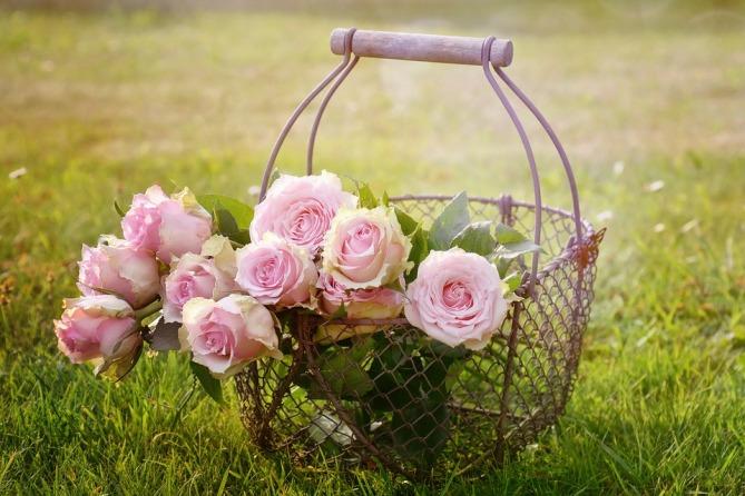 roses-1566792_960_720.jpg