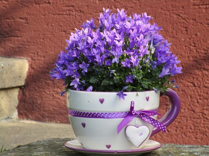 flowers-1455049_960_720.jpg