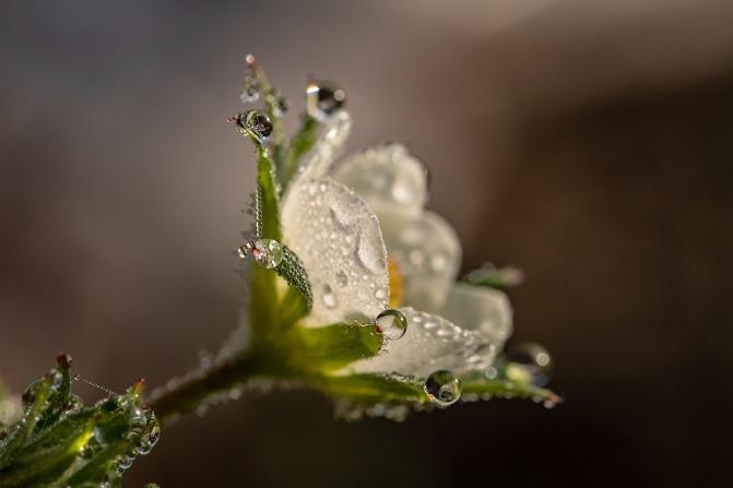 raindrop-3402550_960_720.jpg