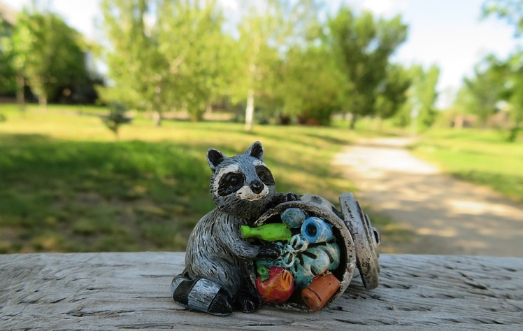 raccoon-2483334_960_720.jpg