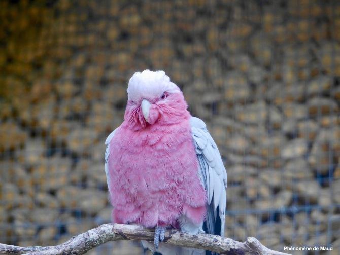 perroquet 1.jpeg