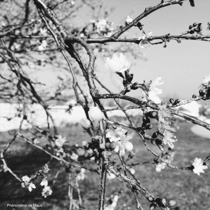 fleurs noir et blanc.jpeg