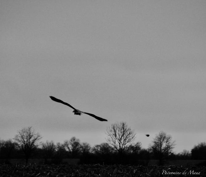 vol oiseau