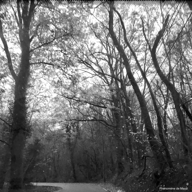 route arbres foret phenomene de maud.jpeg