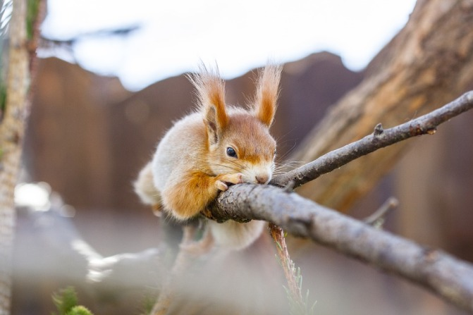 the-squirrel-4142446_960_720.jpg