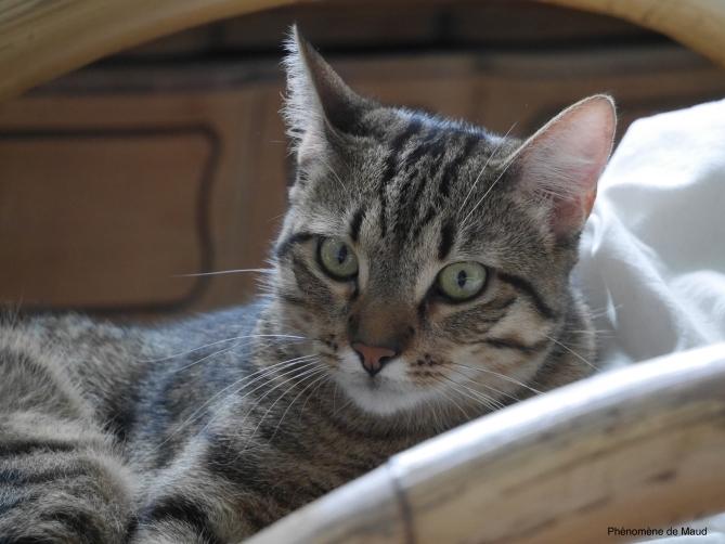 dumbo chaton chat 11 mois Phenomene de maud