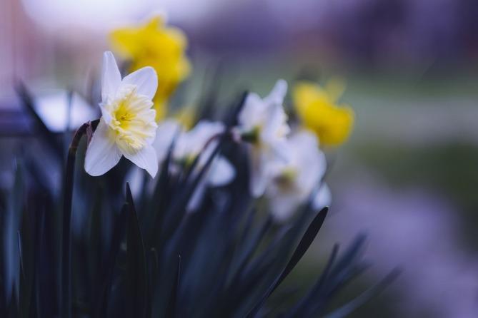 flower-4388353_960_720.jpg
