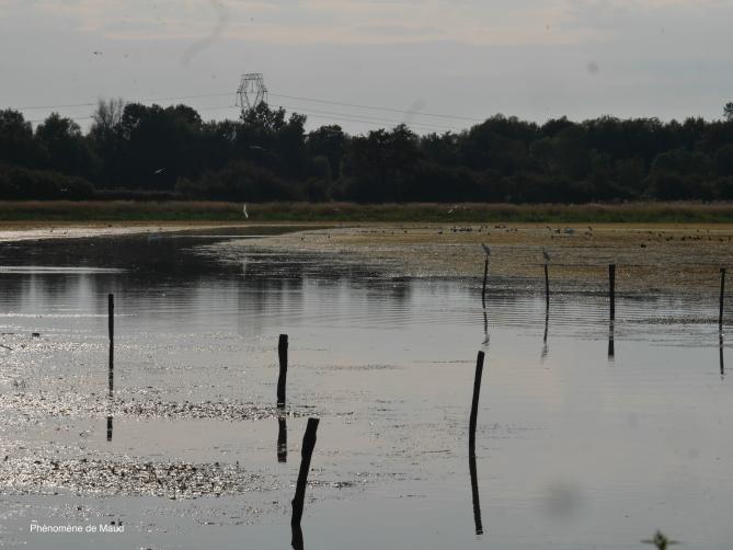 la Dombes étang 1