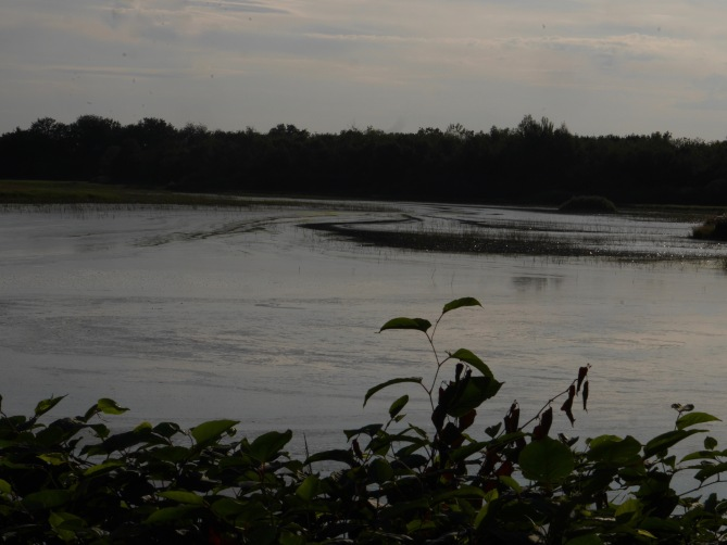 la Dombes étang 2