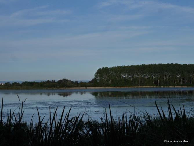 la Dombes étang 4 phenomene de maud