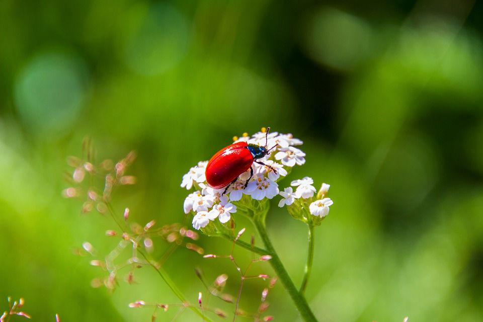 beetle-4453460_960_720
