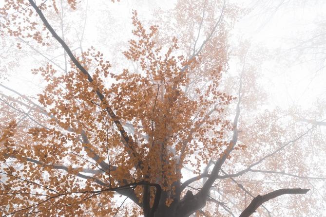 forest-3821416_960_720.jpg