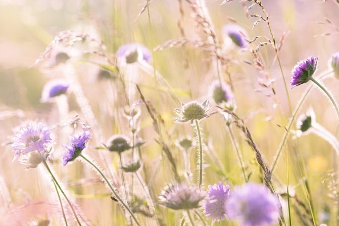 wildflowers-1406846_960_720.jpg