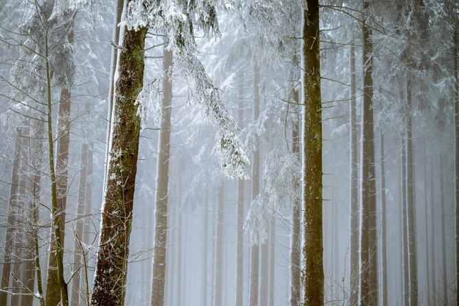 forest-2964073_960_720.jpg