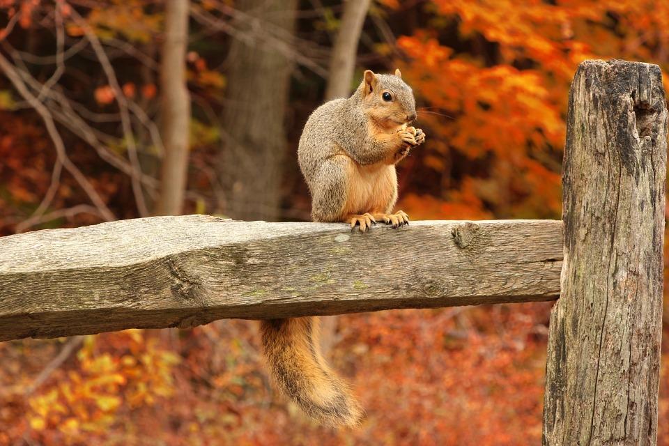 squirrel-316426_960_720.jpg