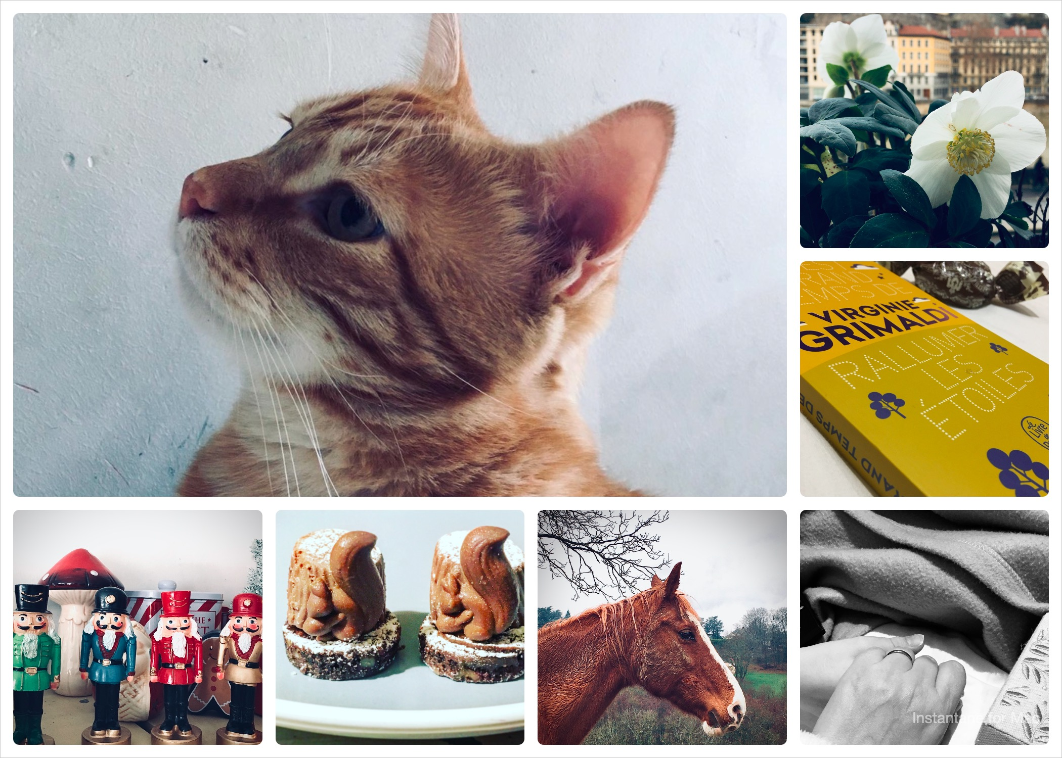 Collage-15.jpg