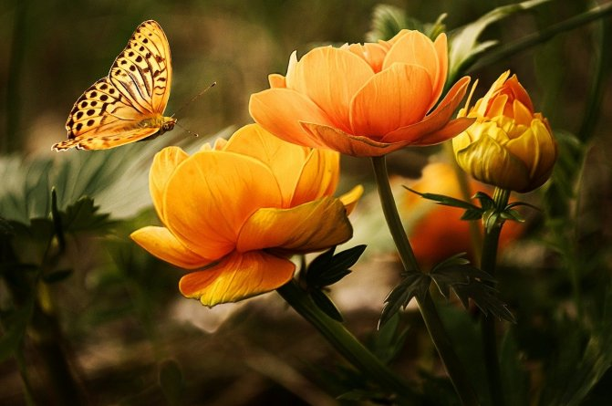 flowers-19830_1280