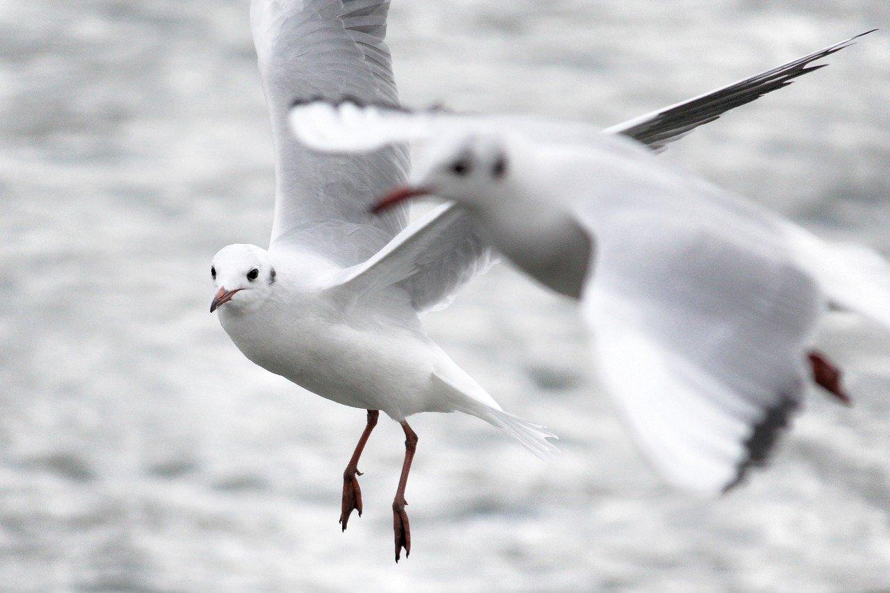 seagull-4827191_1280