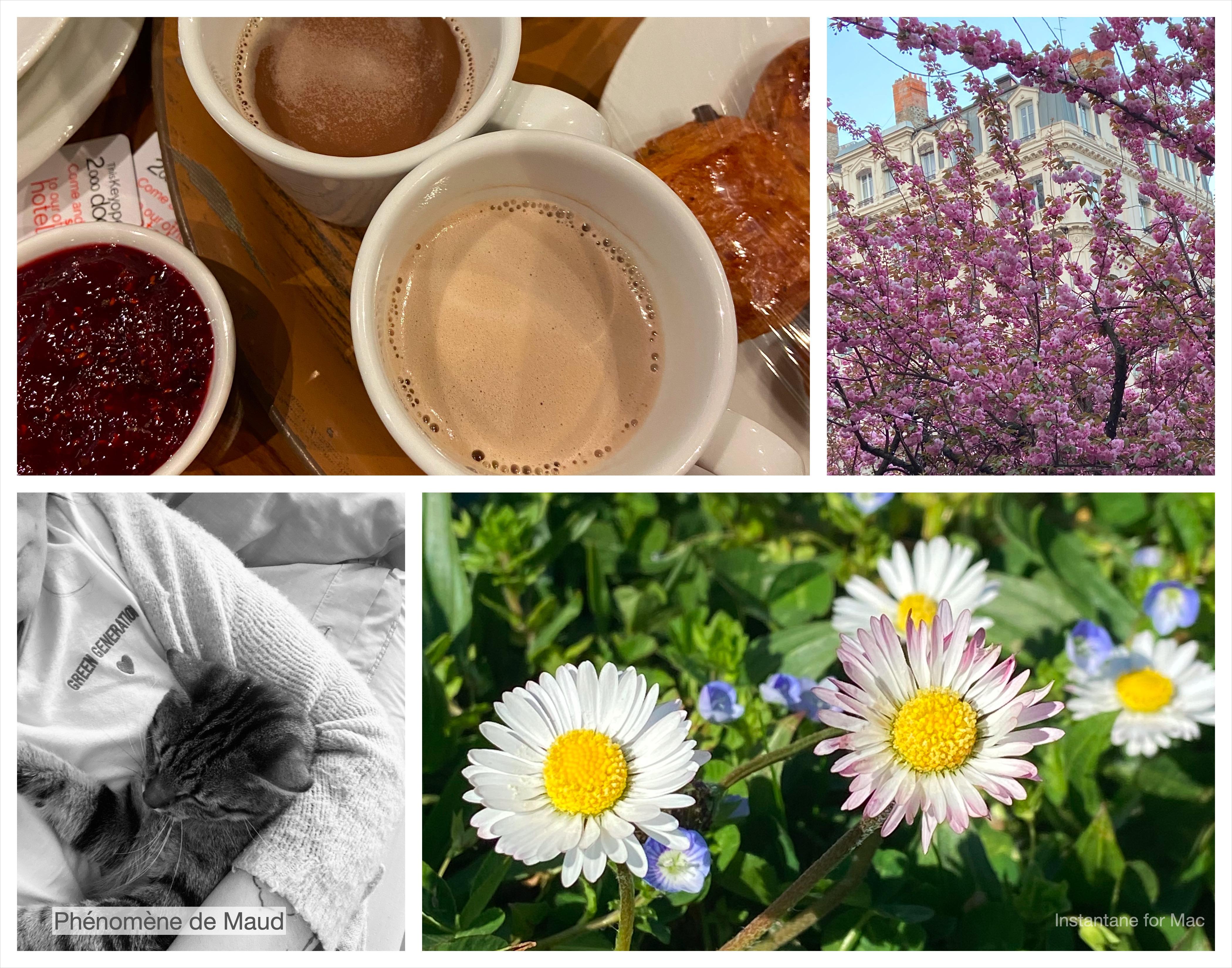 fleurs, petit dejeuner, chat, arbre en fleur,