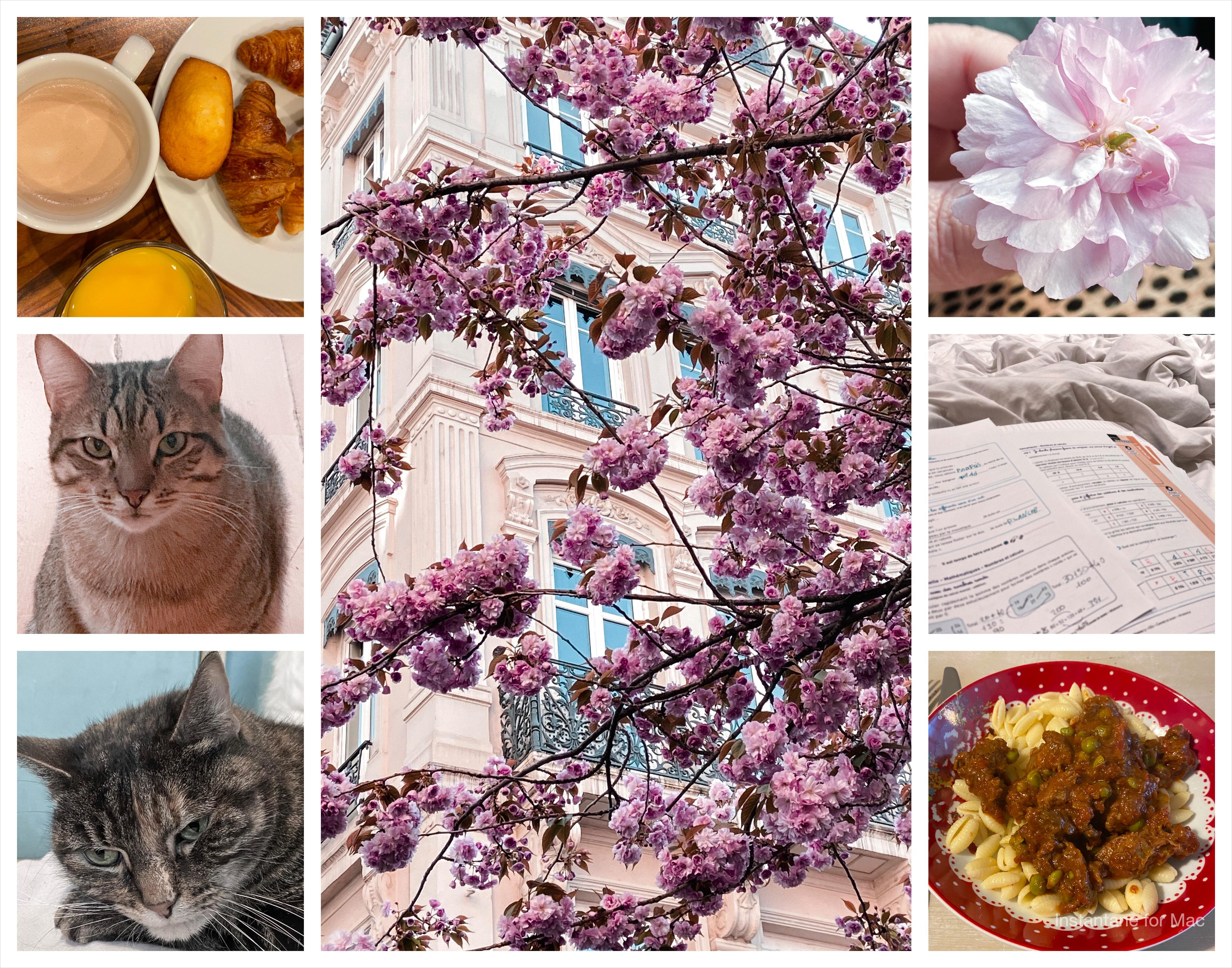 chat, fleur, arbre, boeuf, petit déjeuner, devoir