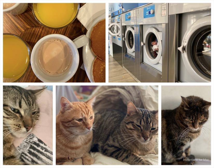 chats, laverie, petit dejeuner, phenomene de maud