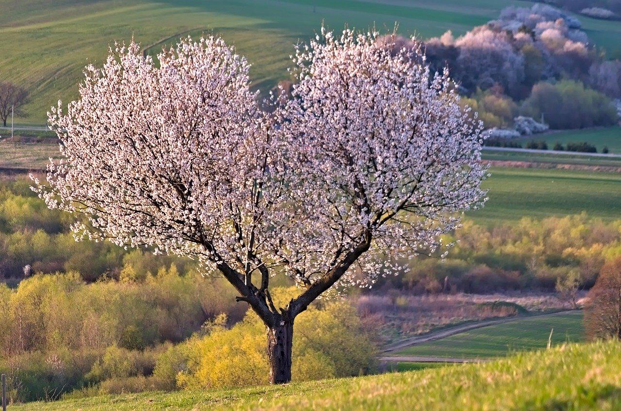 tree-5255288_1280