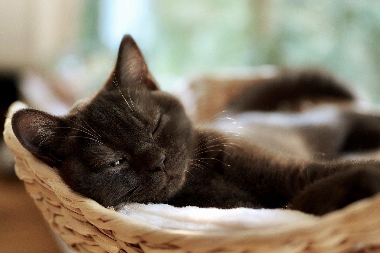 cat-5345498_1280