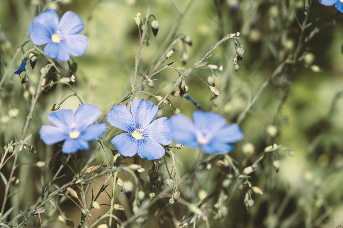 flower-5428541_1280